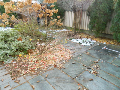 Toronto St. Clair West Village Fall Backyard Cleanup Before by Paul Jung Gardening Services--a Toronto Organic Gardener