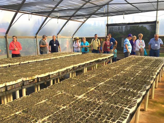 coffee plant nursery greenhouse