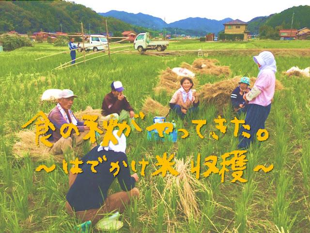 【新米収穫】美味しそうだから、はでかけ米を収穫してみた。