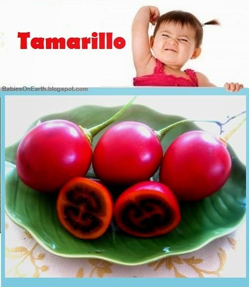 Baby Tamarillo