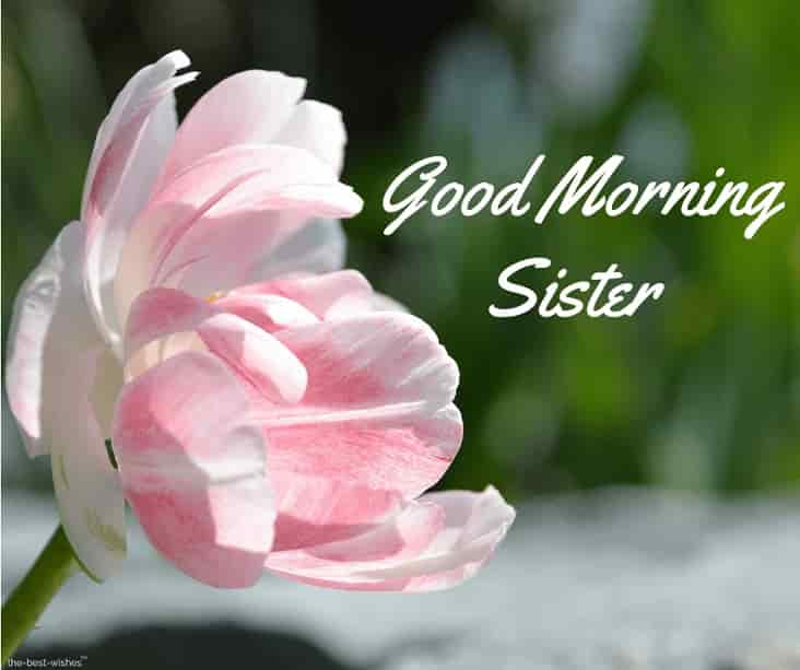 good morning little sister images