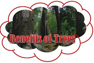 Contoh Pidato Bahasa Inggris Tentang Benefits of Trees dan Arti