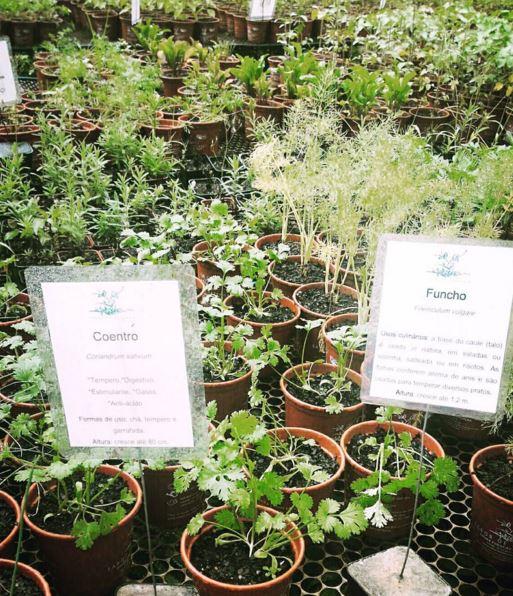 PBS garden | Sabor de fazenda - mudas orgânicas de hortaliças em SP
