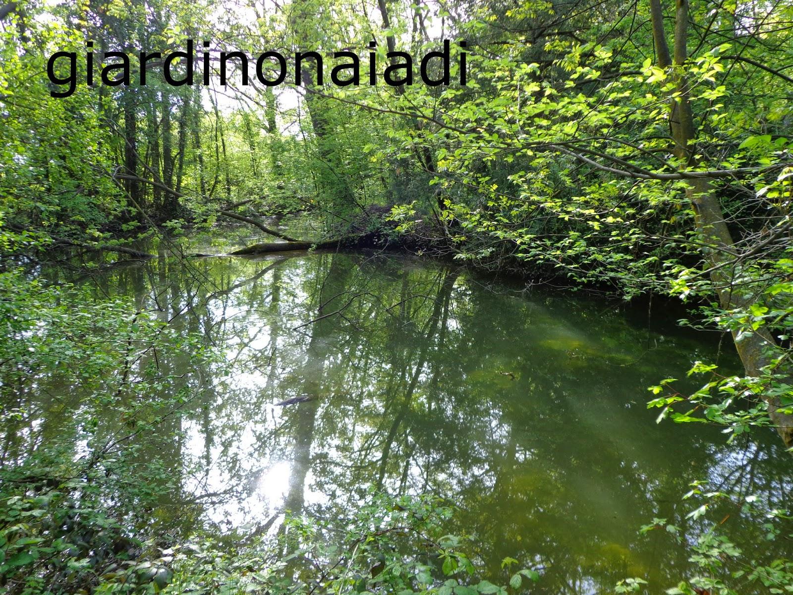 Il giardino delle naiadi filtrazione naturale e tecnica for Alghe laghetto