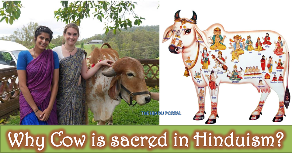 Why Cow is sacred in Hinduism?