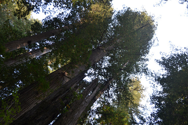 trees above