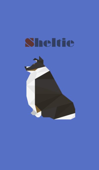 Sheltie(Tricolor)