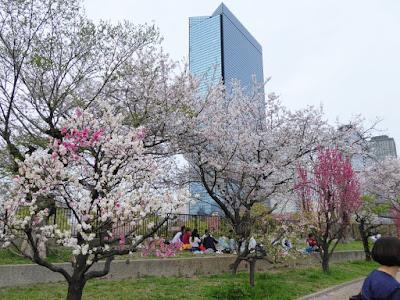 Osaka Castle Park 大阪城桃園(Peach Grove)