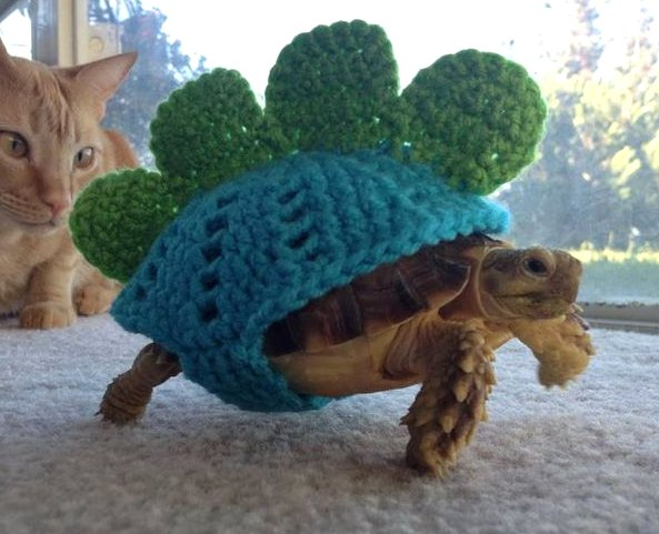 Funny Tortoise Costume Picture