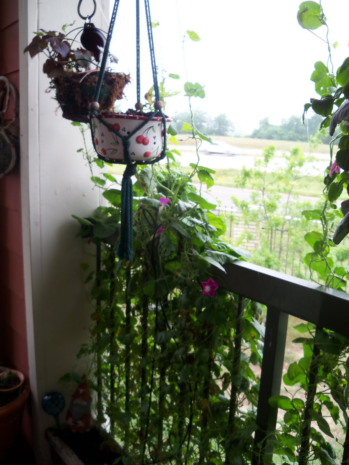 Balcony Privacy Plants Lady Rooster 39s Nest May Brings Many Changes To The West
