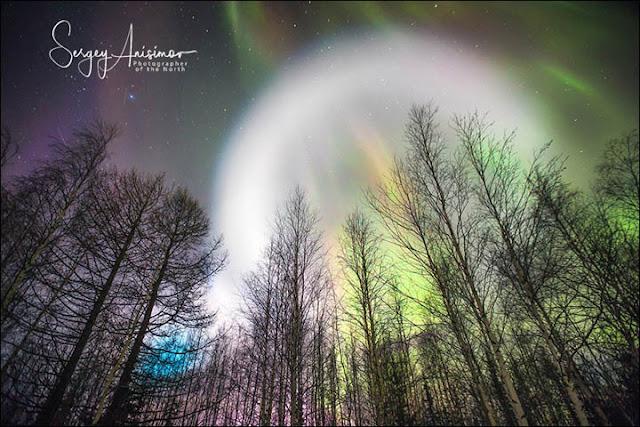 Quả cầu kỳ lạ tỏa sáng cùng ánh sáng cực quang ở sau những ngọn cây. Hình ảnh: Sergey Anisimov.
