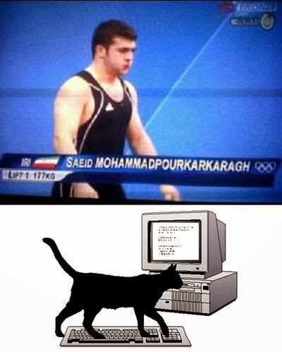 Funny Cat Walking Keyboard Television Caption Olympics Saeid Mohammadpourkarkaragh Joke Picture