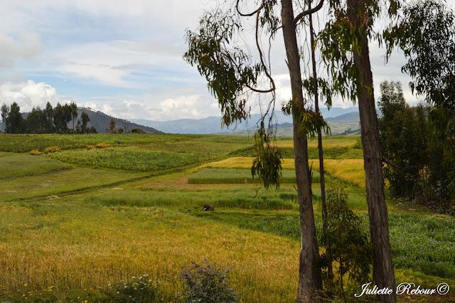 Altiplano péruvien, Vallée Sacrée