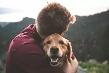 pets, emotional support animals