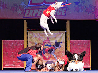 Chris Perondi's Stunt Dog Experience comes to Bothell