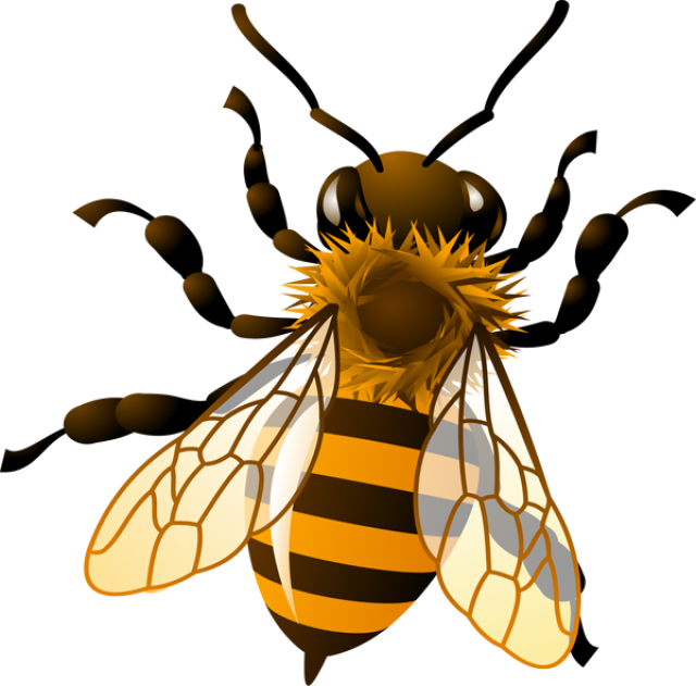 clipart french bee - photo #25