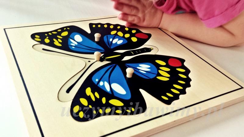 Wychowanie kosmiczne - motyl