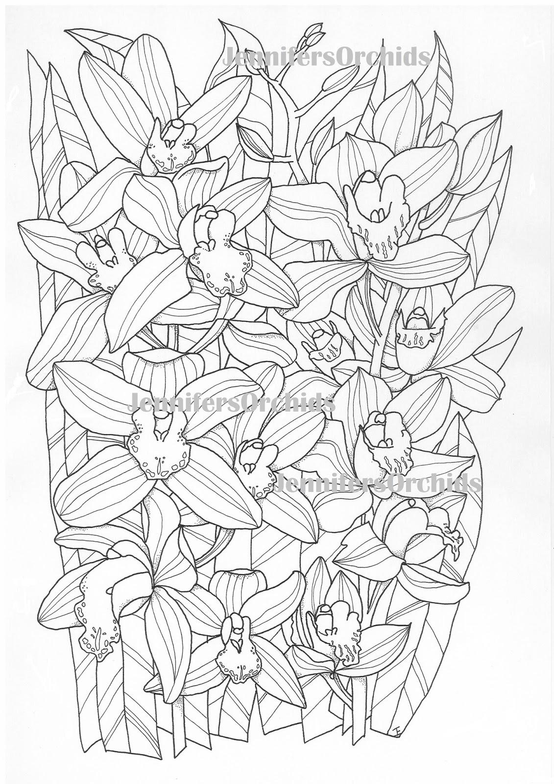 schilderijen orchidee 235 n andere botanische werken