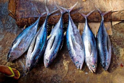 Aneka Olahan Ikan Tongkol yang Lezat dan Bernilai Jual Tinggi