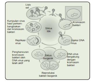Materi SBMPTN Biologi Virus