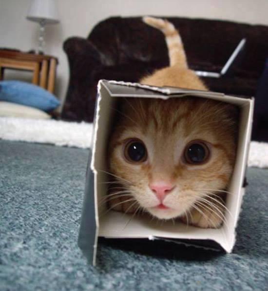 Cats humor #6