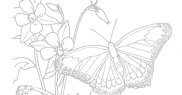 EXPOSE HOMELESSNESS: BUTTERFLY COLORING PAGE (29) FOR OUR