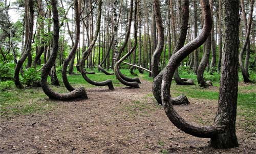 El misterio del bosque torcido en Polonia