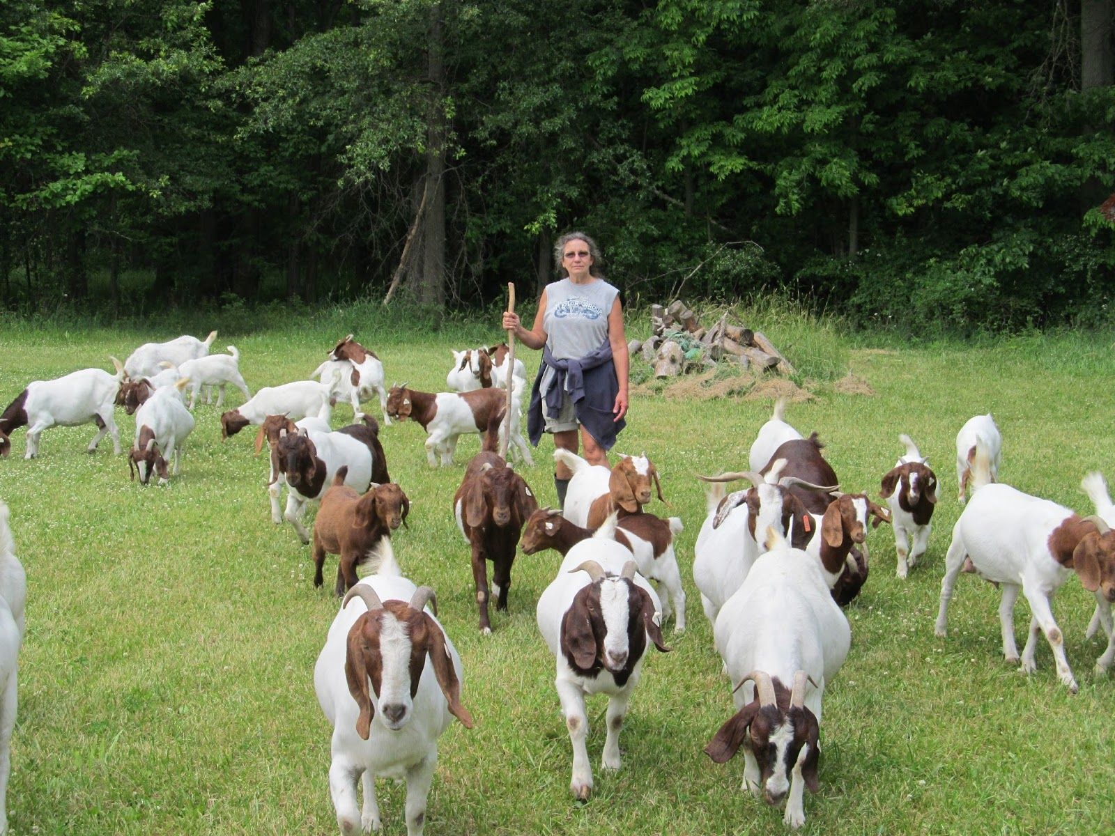 JTTF BOER GOATS: Goat Inventory - photo#44