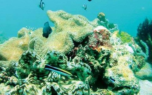 Waspadai Semua Jenis Kerang Laut Dari Perairan Pesisir Sulawesi Selatan