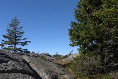 View of the M-M Trail on open rock with a few trees and blue sky