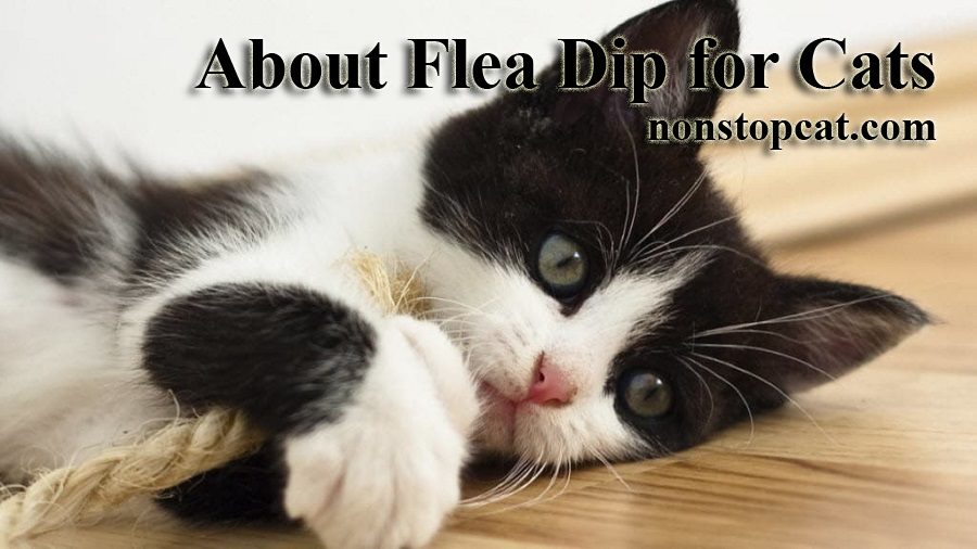 About Flea Dip for Cats