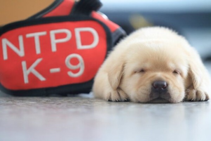 이미지에 대체텍스트 속성이 없습니다; 파일명은 police-department-recruited-new-police-puppies-and-the-internet-is-falling-in-love-with-them-12-600x400.jpg 입니다.