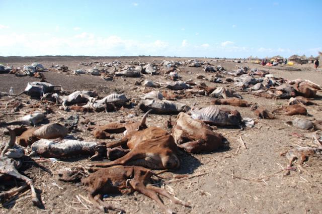 kelapara di somalia