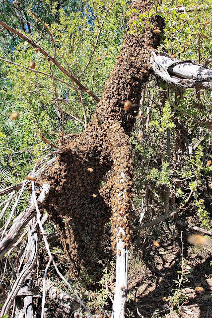 ماذا يسمى صوت النحل ؟