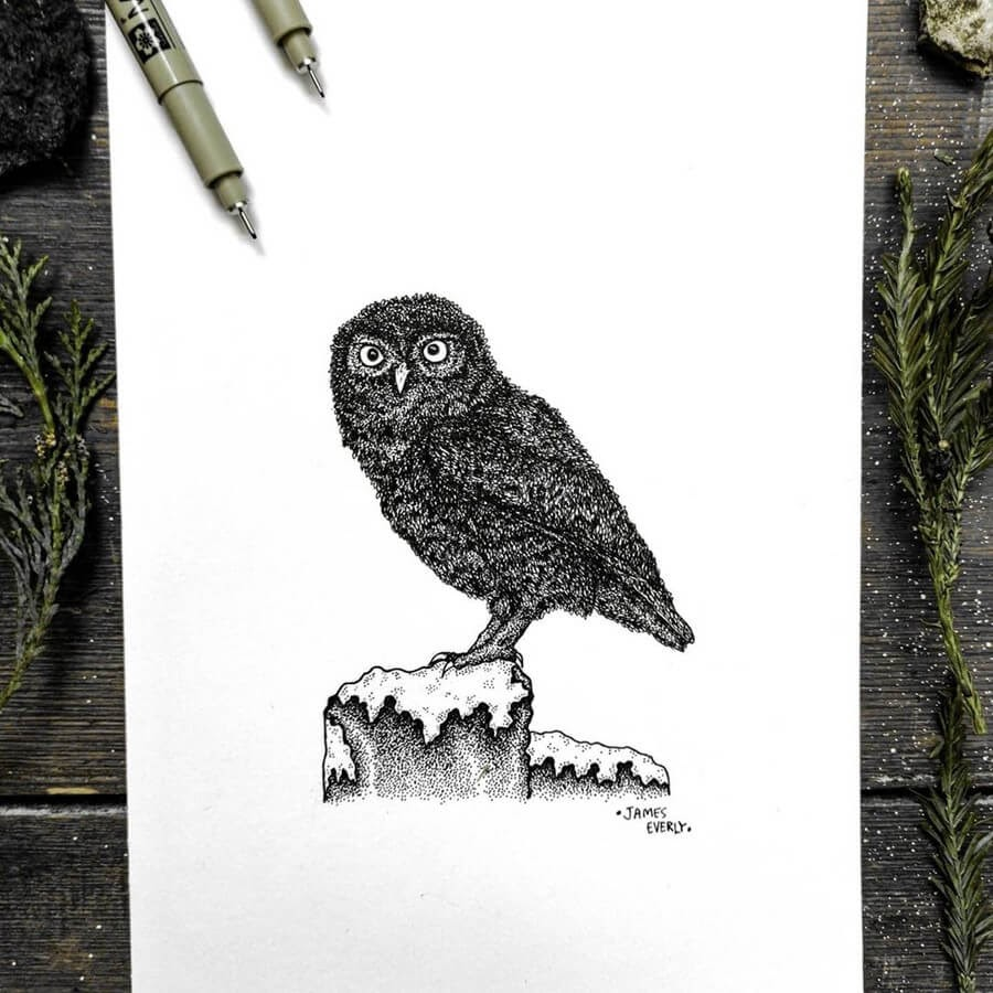 08-Little-Owl-Everly-Drawings-www-designstack-co