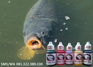 Essen Untuk Umpan Ikan Mas