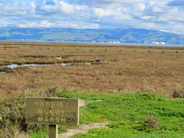 Bird watching Bay Area: Harriet Mundy Marsh