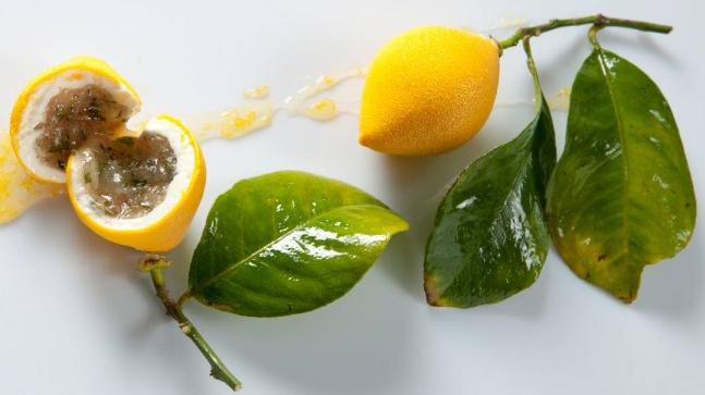 """Résultat de recherche d'images pour """"cedric grolet fruits"""""""