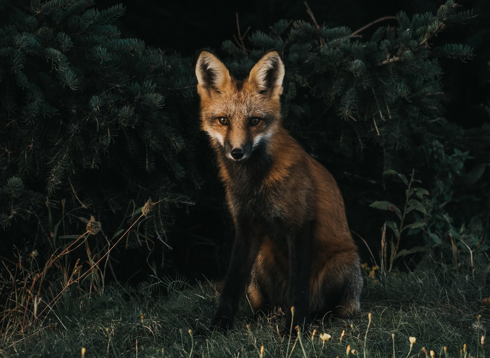 zwierzyna łowna, polowanie, łowiectwo, myślistwo, myśliwy, zabijanie zwierząt