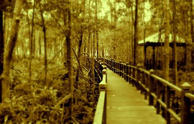 eksplorasi taman negara tanjung piai johor