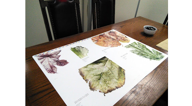Colour proofing the Leafscape book at the printers
