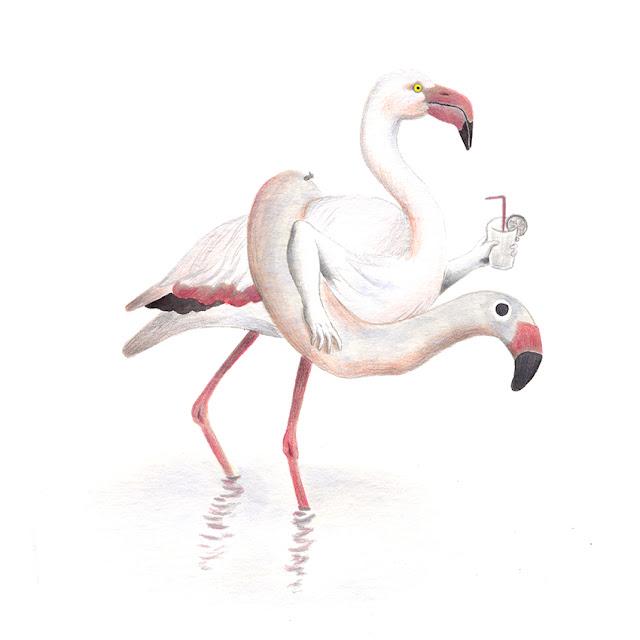 ilustración de pájaros, flamenco rosa, flamenco común, flotador de flamenco, flamenco, verano, ilustración de flamenco, aves de la albufera, phoenicopterus roseus, ilustración de aves, aves acuáticas,  Inktober, Inktober 2017,