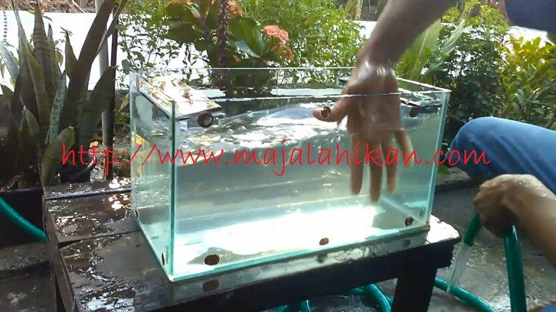 Cara Membersihkan Aquarium Bekas Dan Berkerak