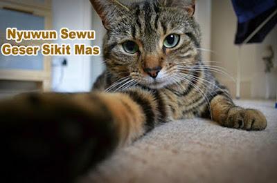 gambar kucing berpose unik
