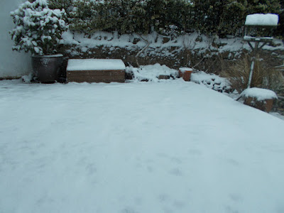 Snow covered patio Sowing seeds indoors 80 Minute Allotment Green Fingered Blog