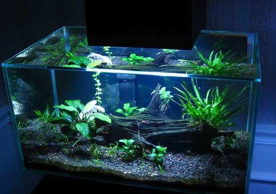 Aquascape Mini Indonesia