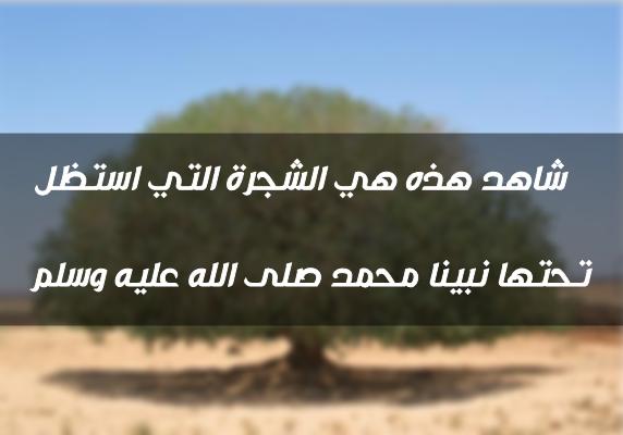 شاهد الشجرة التي جلس تحتها الرسول