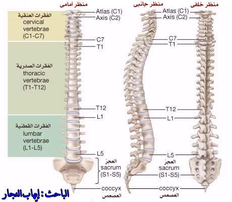 11 10 2012 monkey skull diagram