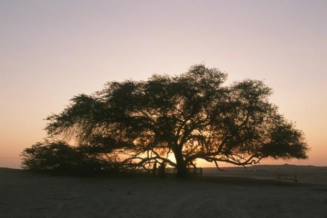 http://4.bp.blogspot.com/-Gr3bE0Spg-8/UYXIoRtpNhI/AAAAAAAACWg/r5JIM4dcK9s/s320/Tree+of+Life.jpg