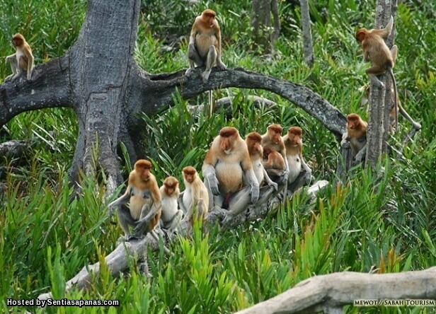 Safari Monkey Tops
